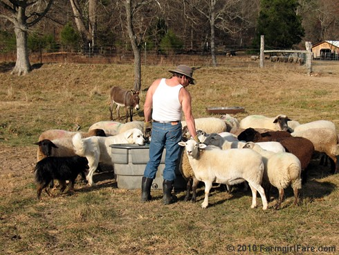 My hunky farmguy playing favorites with Franny | by Farmgirl Susan