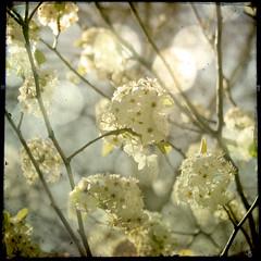 florecitas en el retiro