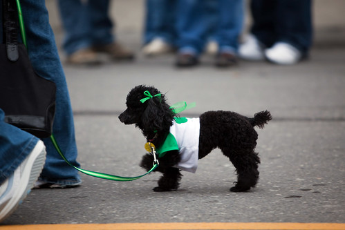St. Patrick's Day - Albany, NY - 10, Mar - 28 | by sebastien.barre