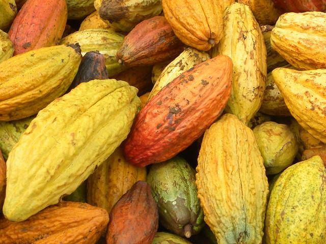 Cacao Closeup