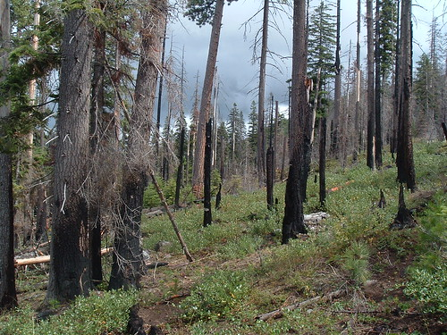 Moderate severity fire | by Oregon State University