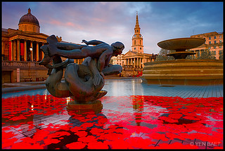 London - Armistice Day and Red Poppies in Trafalgar Square Fountains, Sunset | by Yen Baet