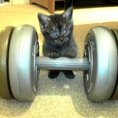 weightlifting cat | by nisora33