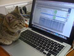 Cats Love Macs, too :)