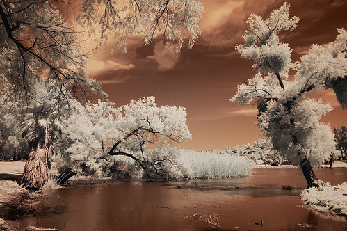 Lindo Lake Infrared | by Bill Gracey