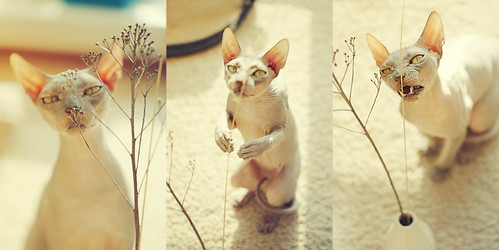 Sphynx Analytics | by LikClick Photography