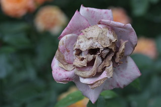 Skull Flower | by Critical Todd