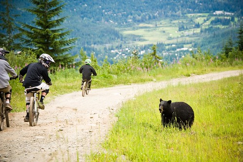 Bear Catching Some of the Action | by GoWhistler
