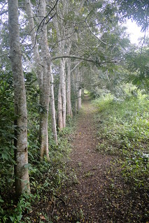 Forest Walk - Hans Cottage Botel - Near Cape Coast - Ghana | by Adam Jones, Ph.D. - Global Photo Archive
