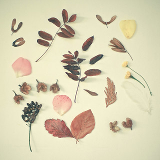 Autumn Collection | by _cassia_