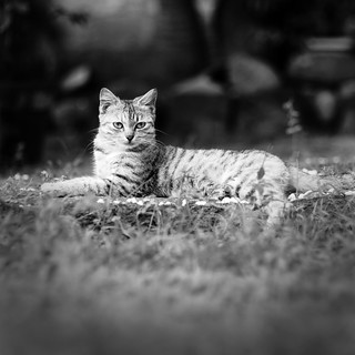 My cat Flame | by May Ann Licudine