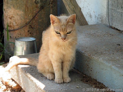 Fifteen year old Molly Doodlebug on the back step | by Farmgirl Susan