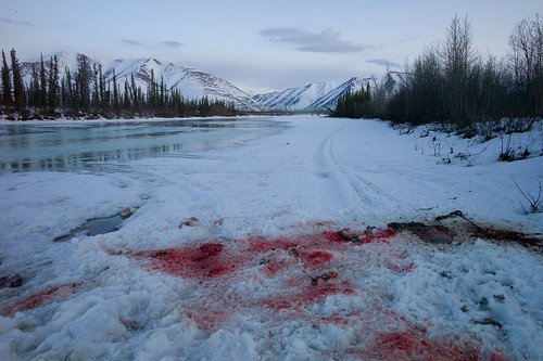 Dempster Highway, Yukon, Canada, 2010 | by Jan Cieślikiewicz