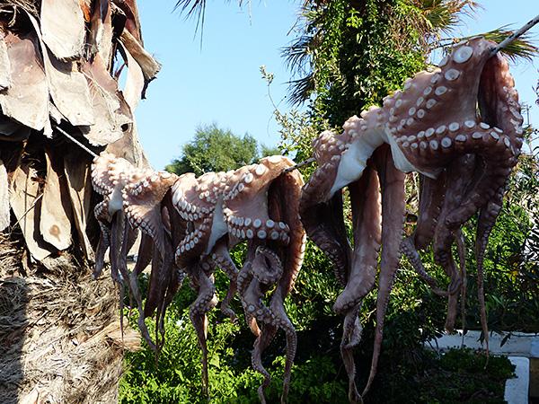 les poulpes du port