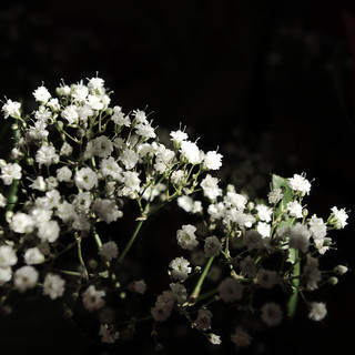 Small white floral subjects | by Bruus UK
