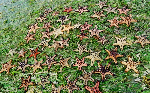 A Group of Starfish