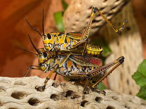 Grasshoppers | by Barry Lloyd