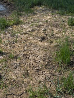 Dried up floodplain meadow | by CEH Science News