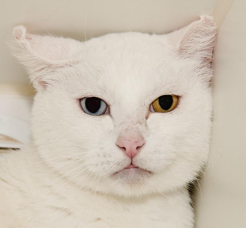 Pablo with heterochromia