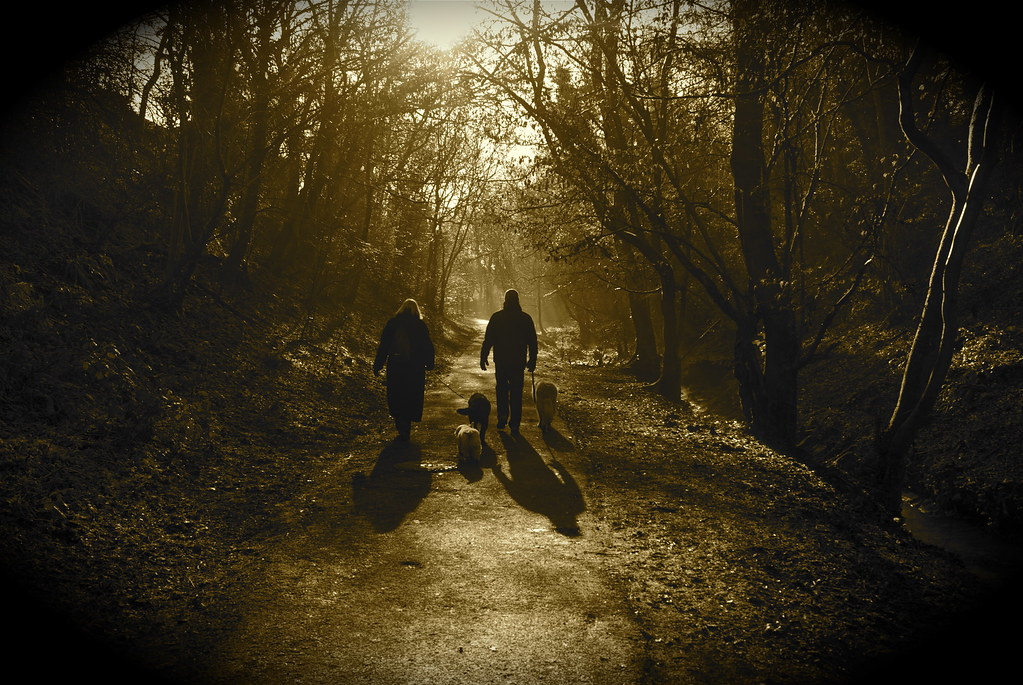 Dog walkers in the wood
