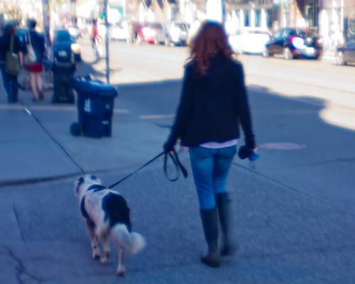 Dog Walks On Two Legs Abused