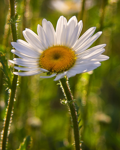 margarita/daisy | by David Pomfret