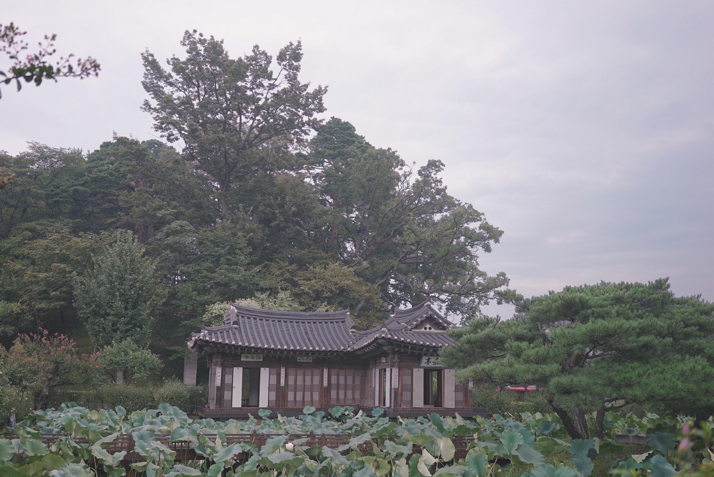 IMG_9262