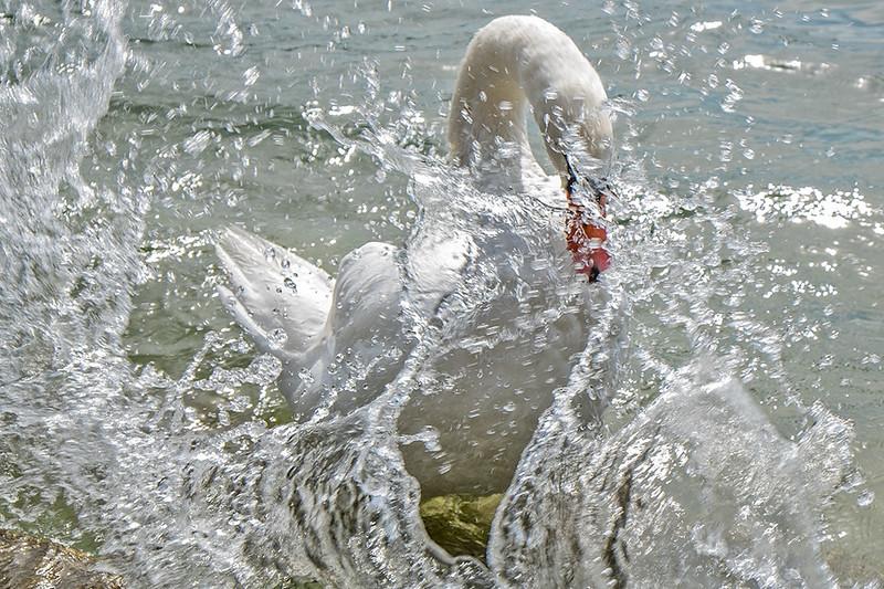 Abstracción acuática