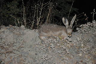 Young hare avoiding UNDP photo session | by UNDP in Europe and Central Asia