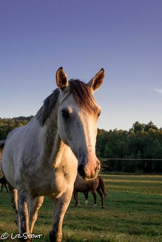 horses09222016 (11 of 11)