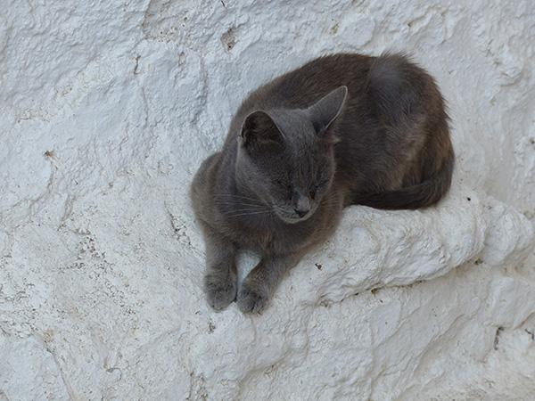 chat gris sur mur blanc
