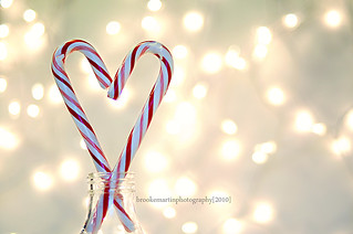 Holiday lovin'! | by barefoot momma photography