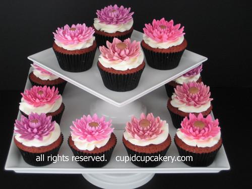Daisy Cakes Cupcakery