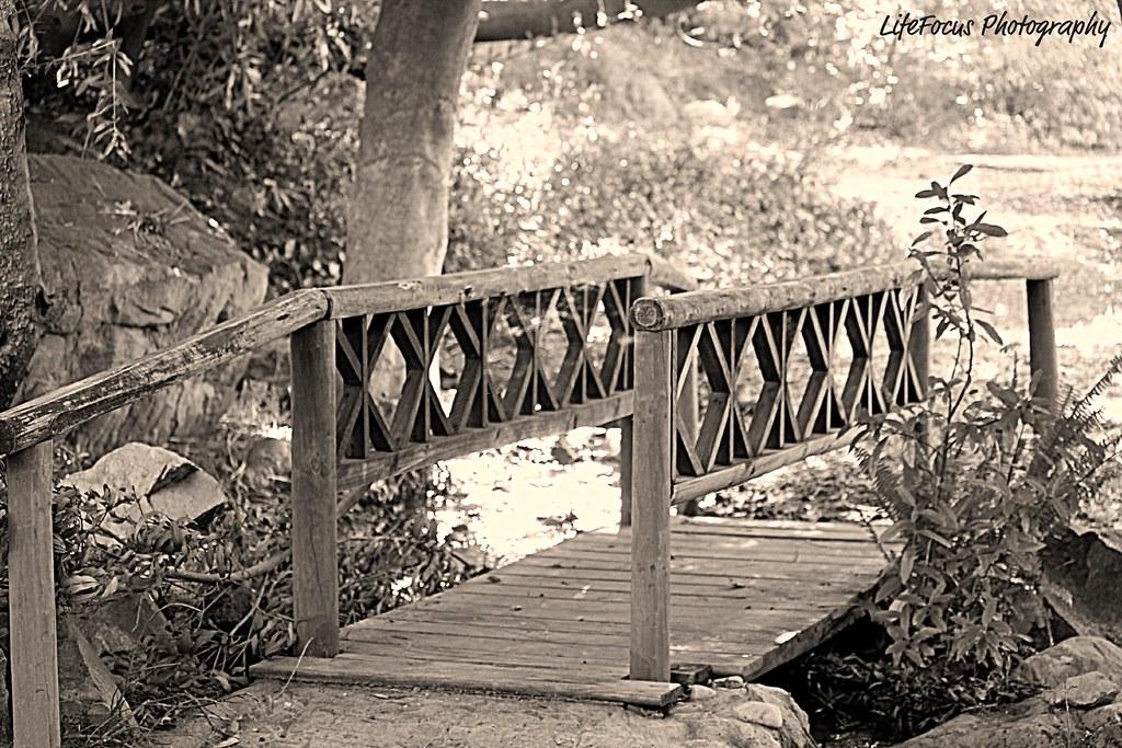 a bridge into the sunshine