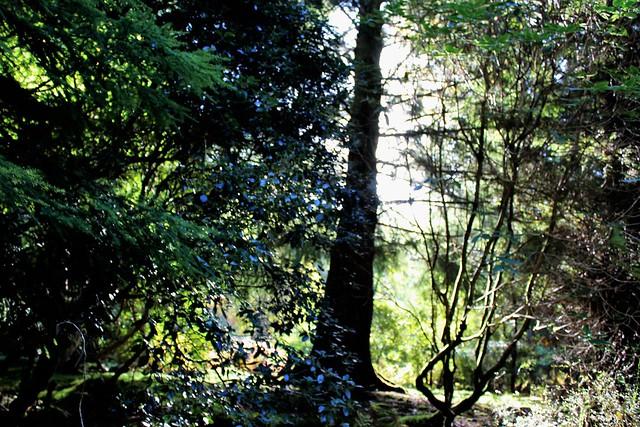 Ardkinglas Woodland Garden, Argyll, Scotland