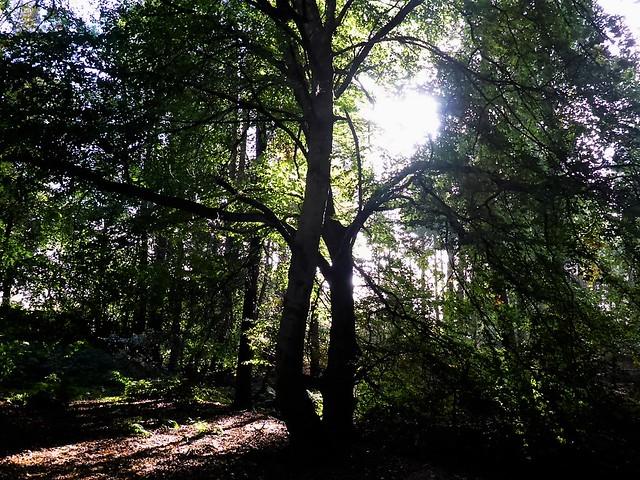 Callendar Park Woodland, Scotland.