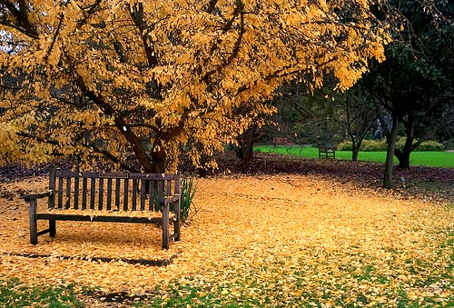 Ginkgo Gold Gravitates Groundward | by James Botanist