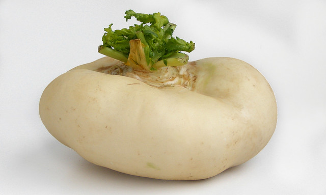 Chinese Turnip from Wenzhou