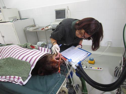 Veterinary Surgeon Weng Yan Ng doing health check for Kaffe 9
