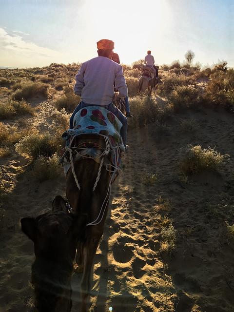 Camel safari at Khuri sand dunes, near Jaisalmer, India ジャイサルメール、クーリー砂丘へのキャメルサファリにて