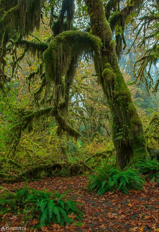 Moos - Olympic National Park
