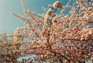 Blossoms | by Wild Kindness