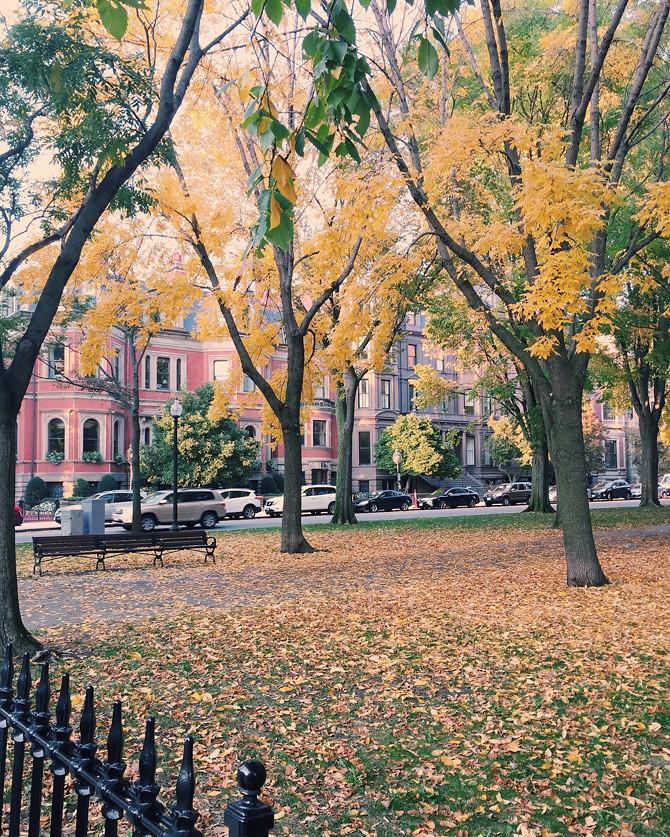 boston commonwealth ave mall fall foliage