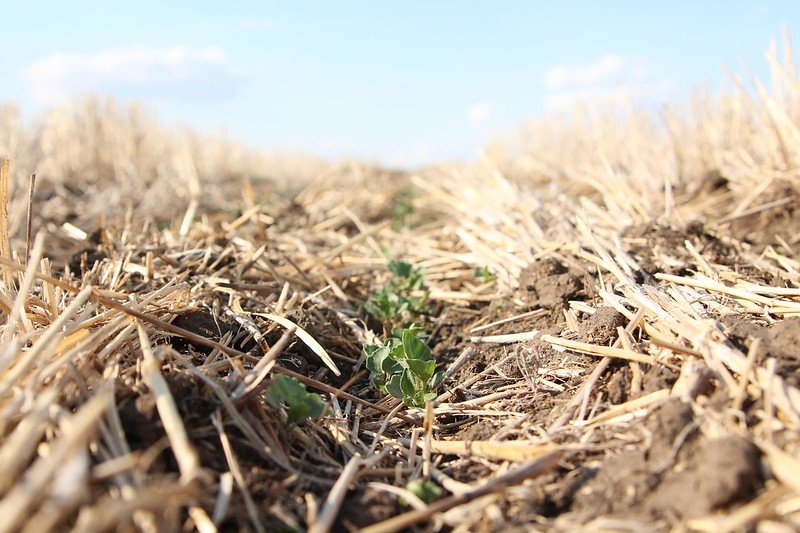 Seeding 2015