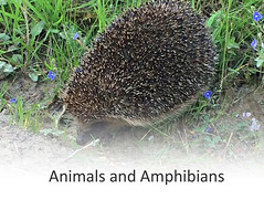 animals and amphibians