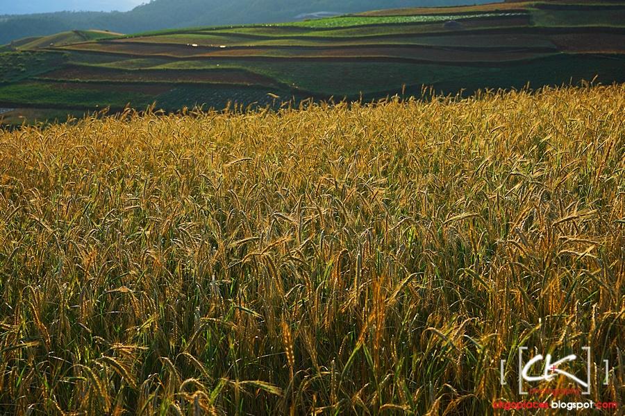 Yunnan_0090