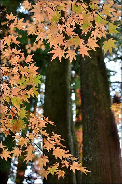 福壽山農場楓葉季022