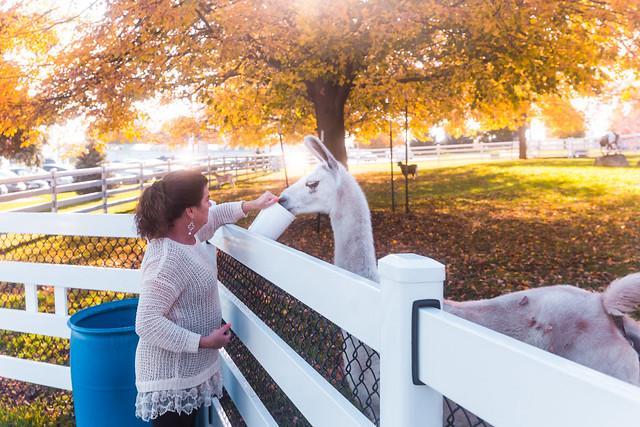 Laura Feeding Llama