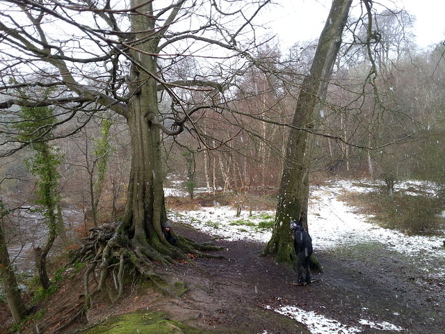 Rosslyn Glen Snow