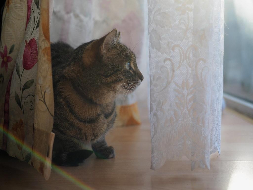 7e0_c035880-cat-lens-flare